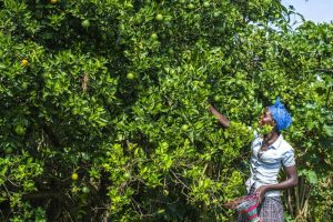 Fruitboompjes